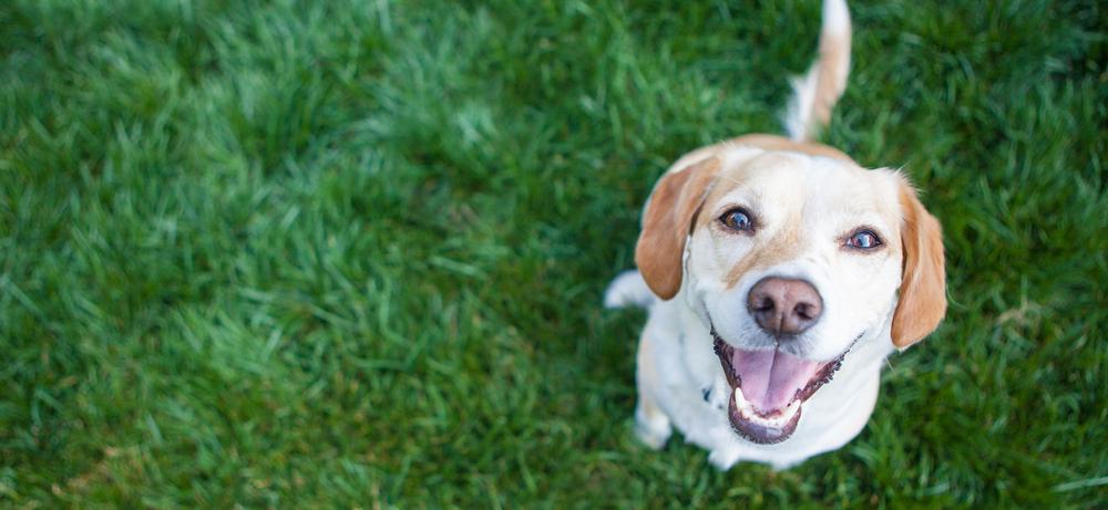 犬とのふれあいが「癒し効果 をもたらしてくれる!」